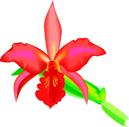 animated-orchid-image-0001