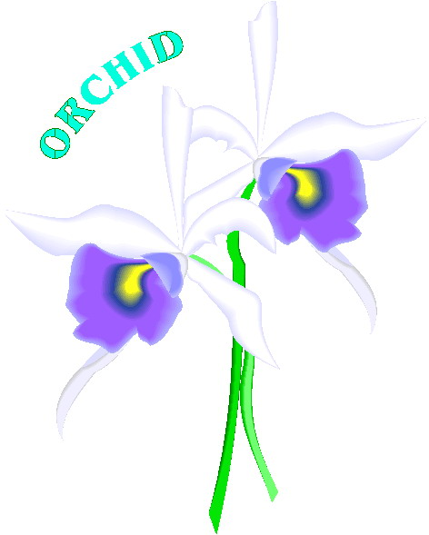 animated-orchid-image-0002
