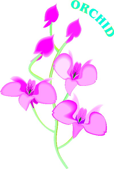 animated-orchid-image-0004