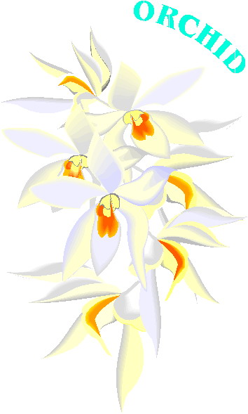 animated-orchid-image-0005