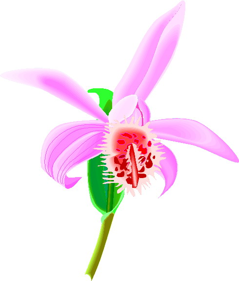 animated-orchid-image-0008