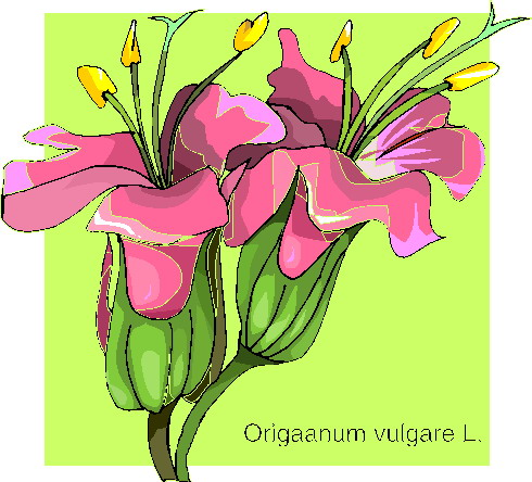 animated-orchid-image-0012