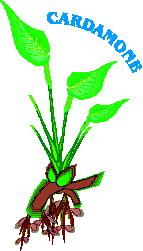 animated-leaf-image-0002