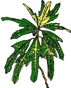 animated-leaf-image-0003