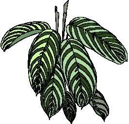 animated-leaf-image-0004