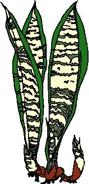 animated-leaf-image-0006