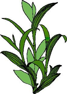 animated-leaf-image-0007