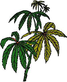 animated-leaf-image-0008