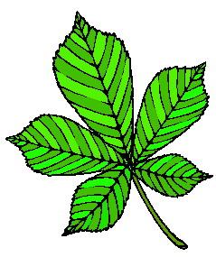 animated-leaf-image-0019