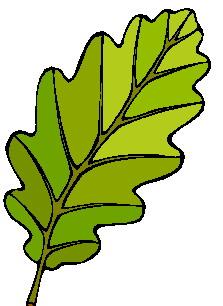 animated-leaf-image-0027