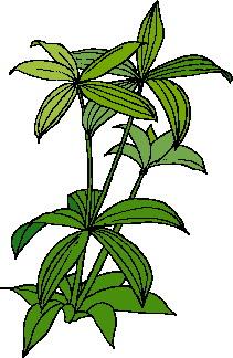 animated-leaf-image-0035