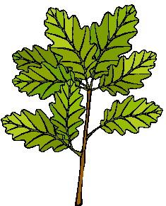animated-leaf-image-0082