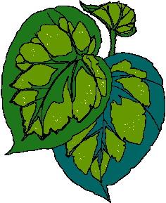 animated-leaf-image-0083