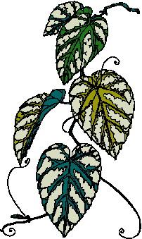 animated-leaf-image-0084