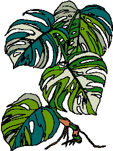 animated-leaf-image-0085