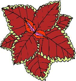 animated-leaf-image-0087