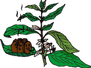 animated-leaf-image-0088