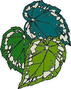 animated-leaf-image-0089