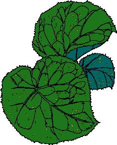 animated-leaf-image-0090