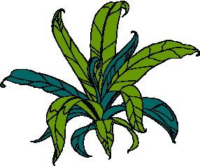 animated-leaf-image-0093