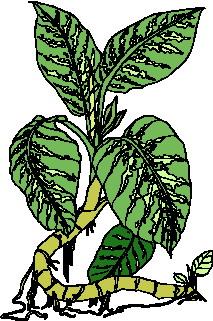 animated-leaf-image-0094