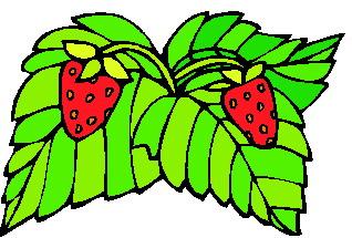 animated-leaf-image-0095