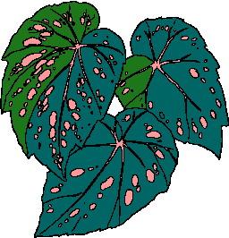 animated-leaf-image-0098