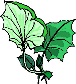 animated-leaf-image-0099