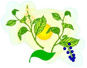 animated-leaf-image-0100