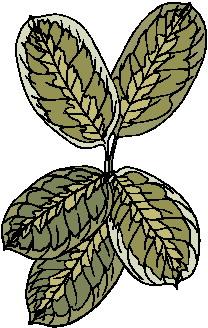animated-leaf-image-0101