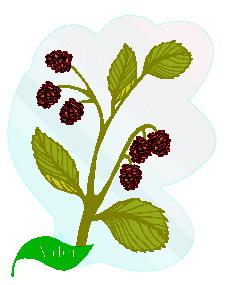 animated-leaf-image-0103