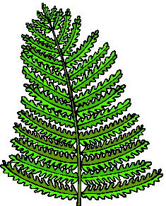 animated-leaf-image-0105