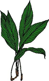 animated-leaf-image-0106