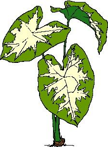 animated-leaf-image-0109