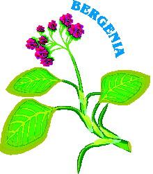 animated-leaf-image-0110