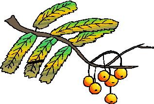 animated-leaf-image-0112