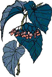 animated-leaf-image-0113