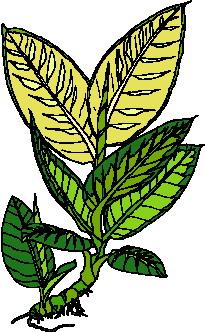 animated-leaf-image-0114