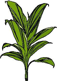 animated-leaf-image-0116