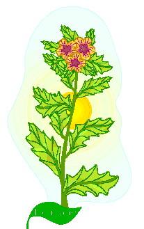 animated-leaf-image-0118