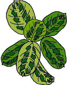 animated-leaf-image-0121