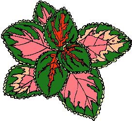 animated-leaf-image-0123