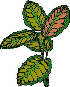 animated-leaf-image-0124