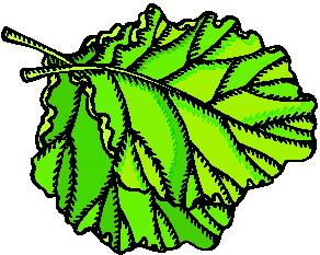 animated-leaf-image-0125