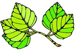 animated-leaf-image-0127