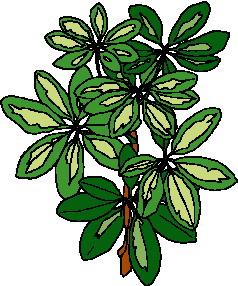 animated-leaf-image-0128