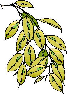 animated-leaf-image-0129