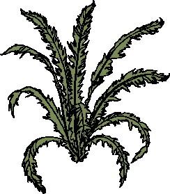 animated-leaf-image-0131
