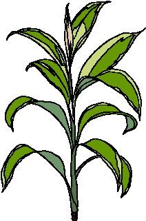 animated-leaf-image-0133