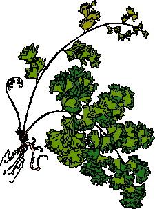 animated-leaf-image-0134